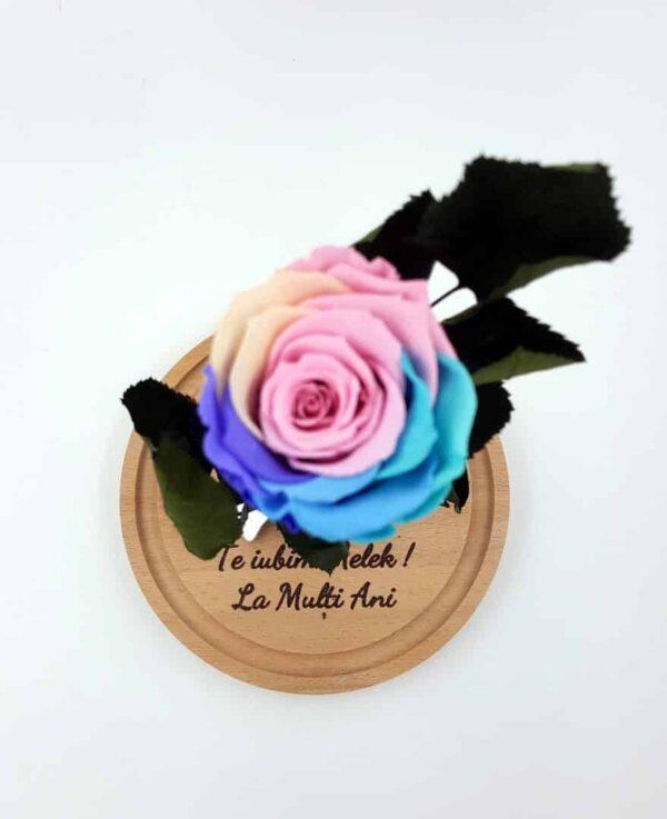 trandafir criogenat mmulticolor pastel