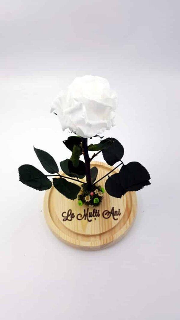 trandafir criogenat alb wide flowers in cupola de sticla