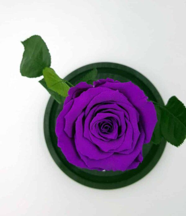 trandafir criogenat mov electric