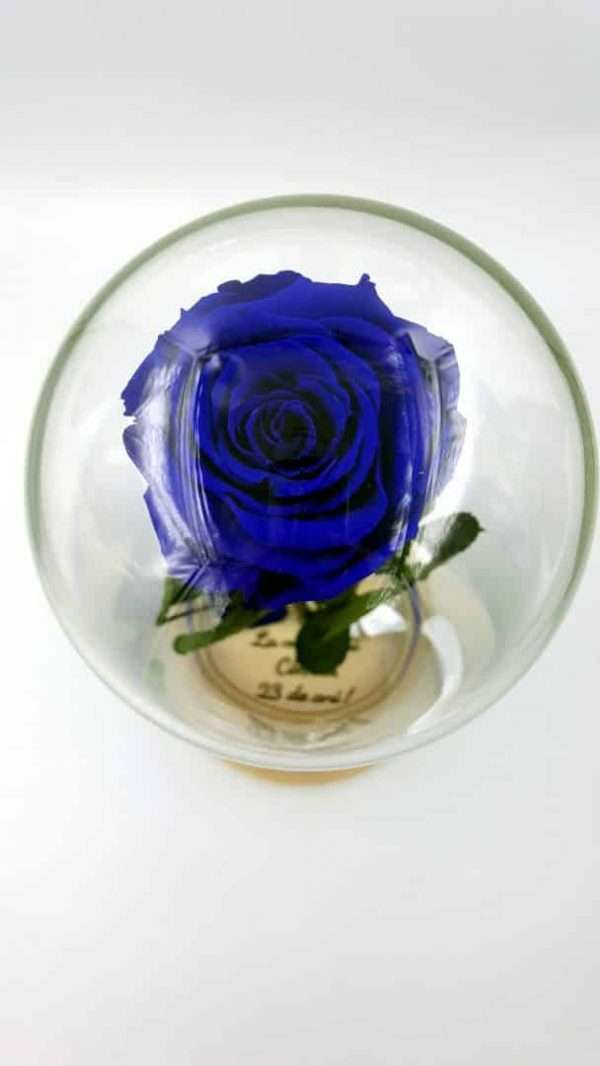 trandafir criogenat albastru wide flowers in cupola de sticla