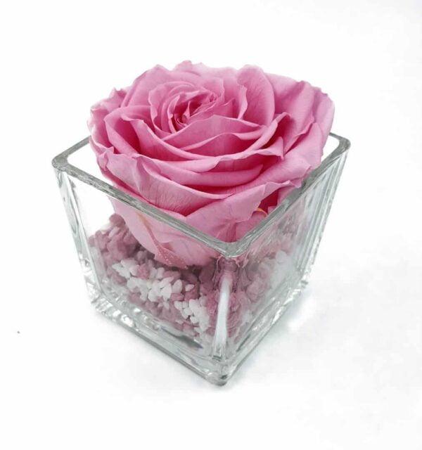 trandafir criogenat roz