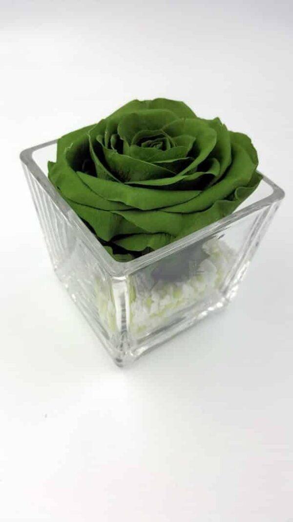 trandafir criogenat verde