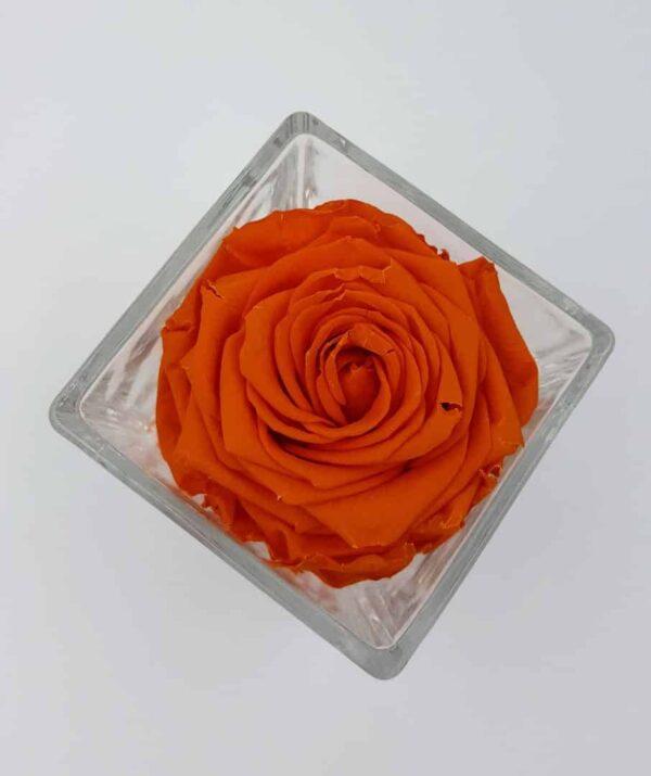 trandafir criogenat portocaliu
