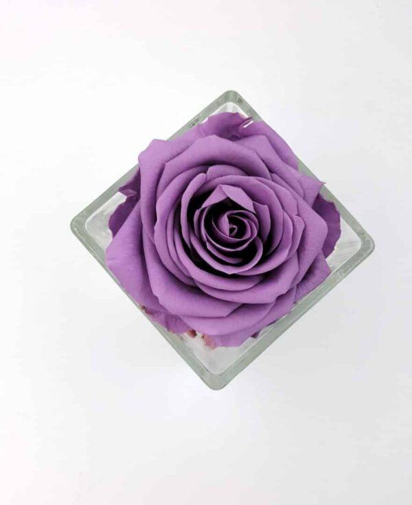 trandafir criogenat lila