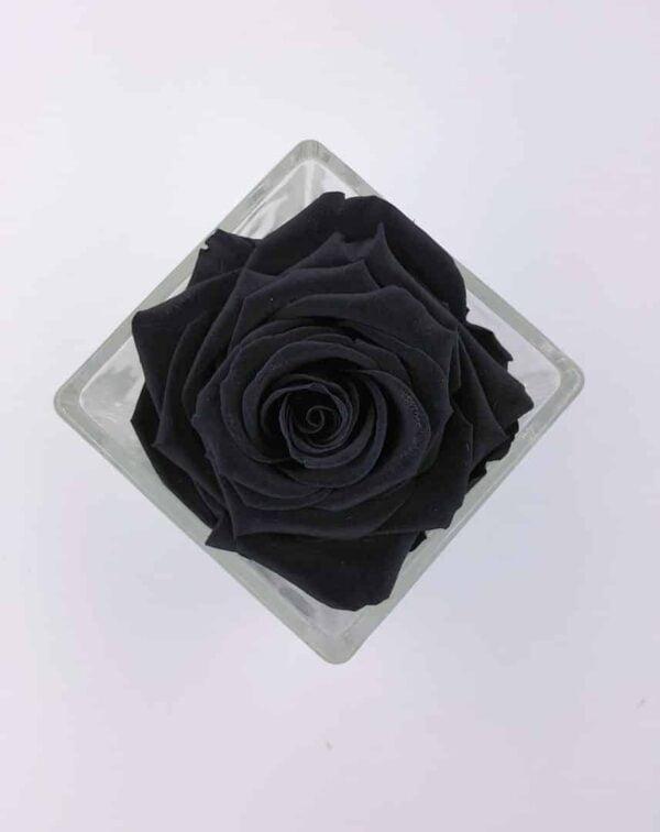 trandafir criogenat negru