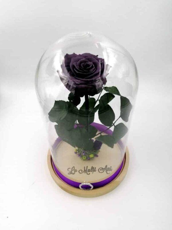 trandafir criogenat mov