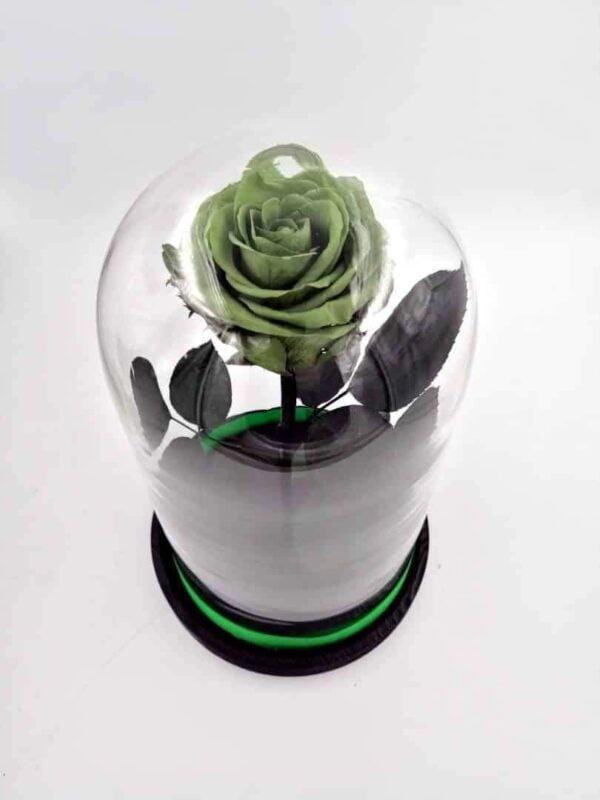 trandafir criogenat verde mare wide flowers in cupla mare de sticla