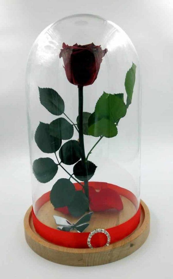 trandafir criogenat rosu wide flowers in cupola de sticla