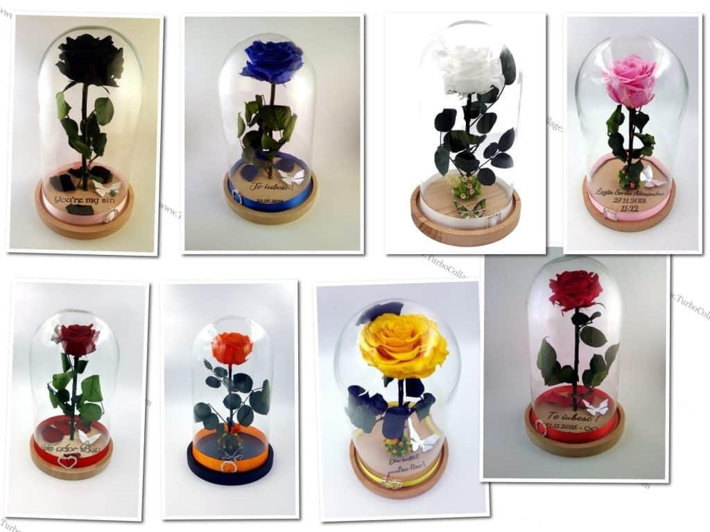 trandafir criogenat în cupolă