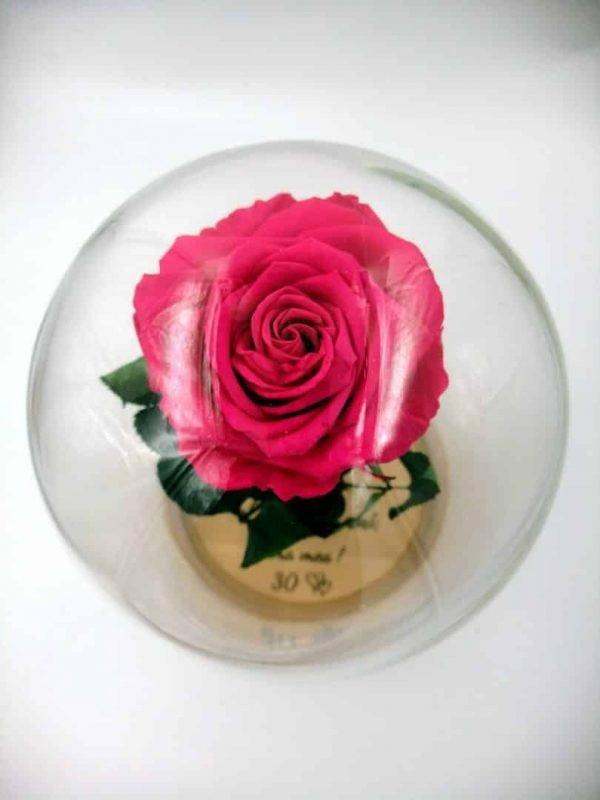 trandafir criogenat fucsia mare wide flowers in cupla mare de sticla