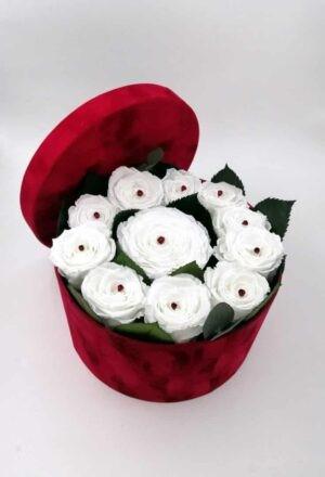 trandafiri cutie