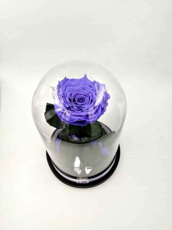 Trandafir criogenat natural Wide Flowers ® gigant, indigo, pe pat de petale, în cupolă mare de sticlă cu mesaj pirogravat.
