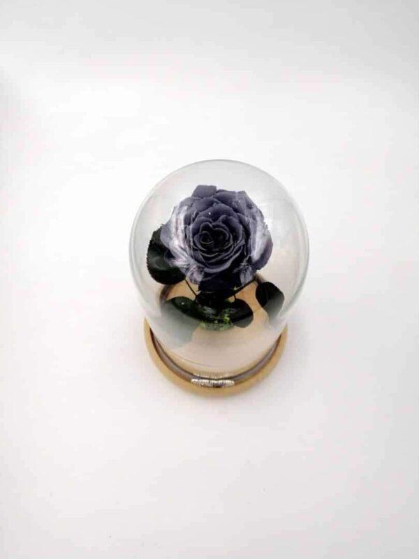 trandafir criogenat gri