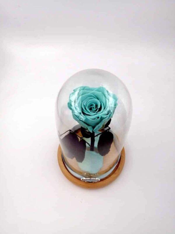trandafir criogenat turquoise aquamarine