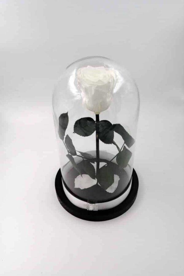 trandafir criogenat natural wide flowers alb in cupola medie de sticla