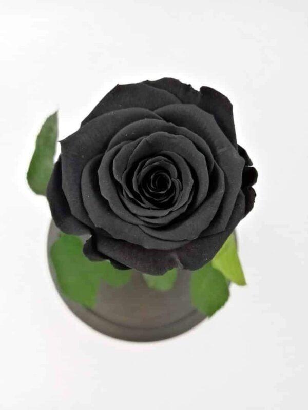 trandafir criogenat natural negru Wide Flowers