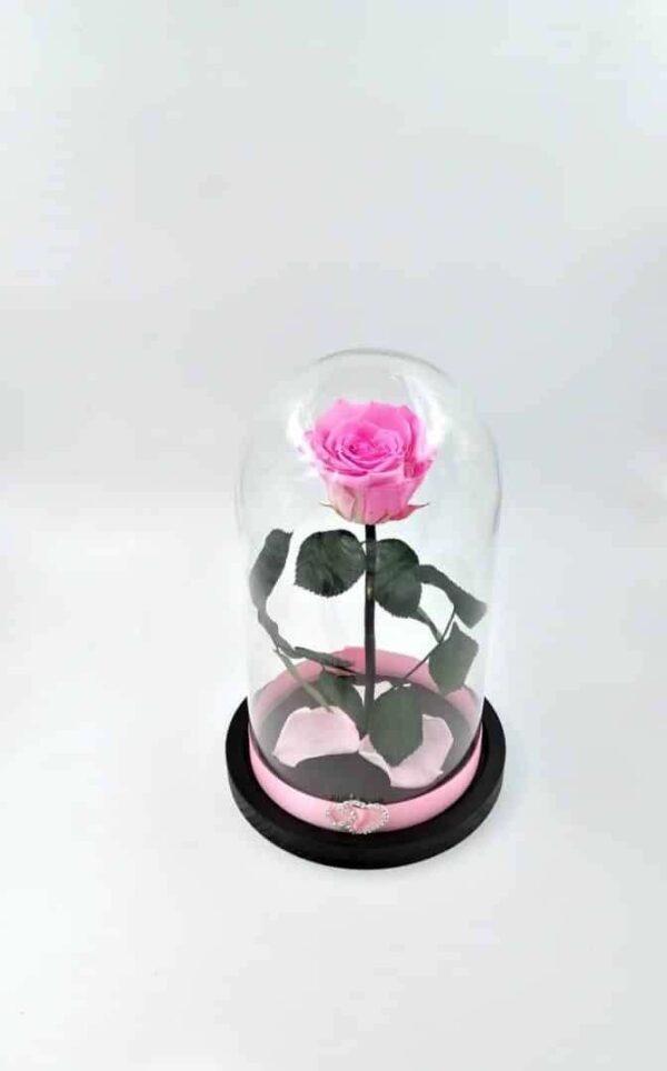 trandafir criogenat natural roz Wide Flowers