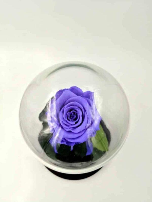 trandafir criogenat natural indigo Wide FLowers