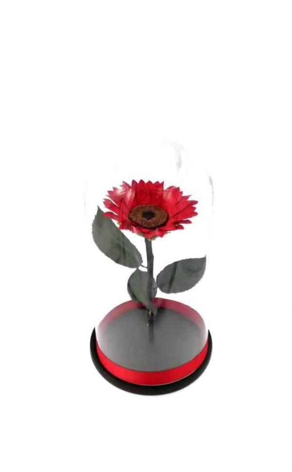 Aranjament Floarea soarelui criogenata rosie Wide FLowers
