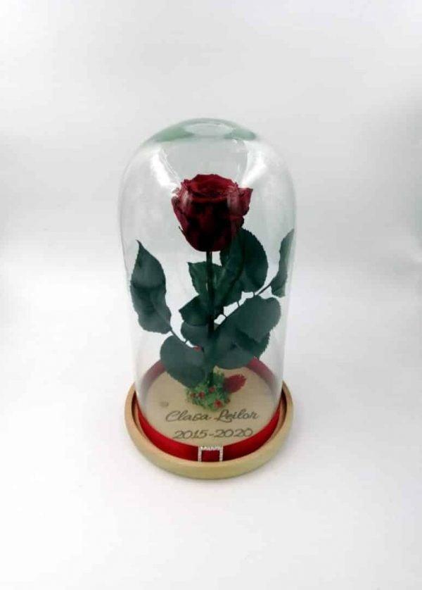 Trandafir Criogenat Natural Wide Flowers visiniu