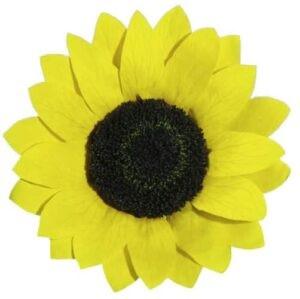 Floare soarelui Criogenată