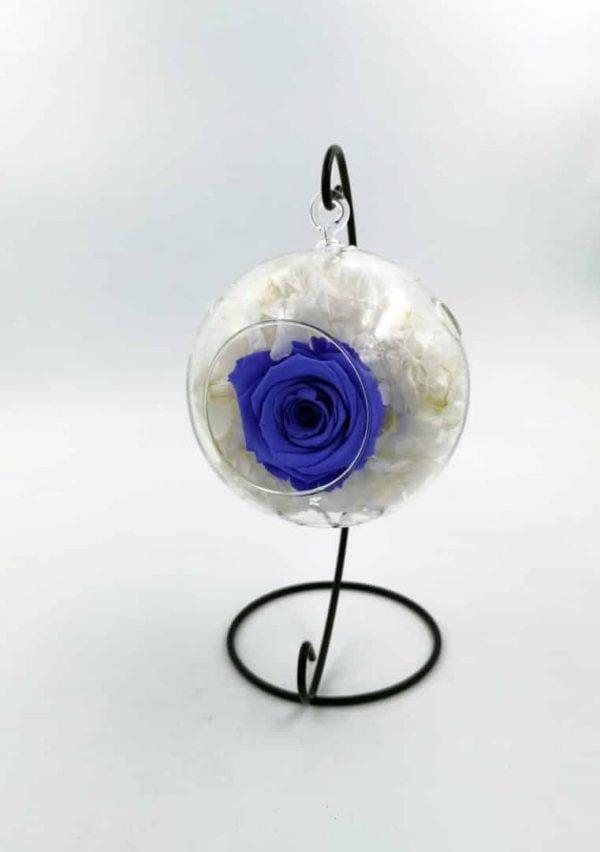 indigo in cuib hortensie alba